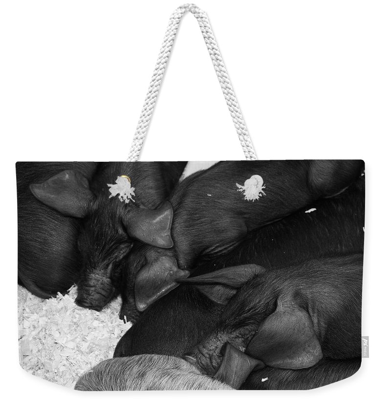 Pig Weekender Tote Bag featuring the photograph Pig Pile by Cathy Mahnke