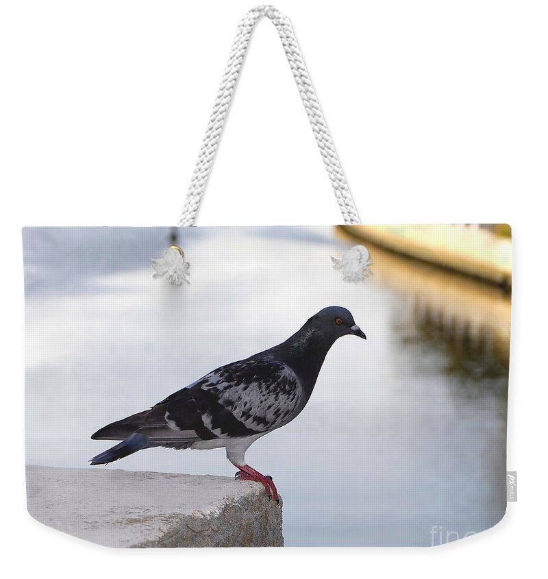 Pigeon Weekender Tote Bag featuring the photograph Pigeon By The River by David Lee Thompson
