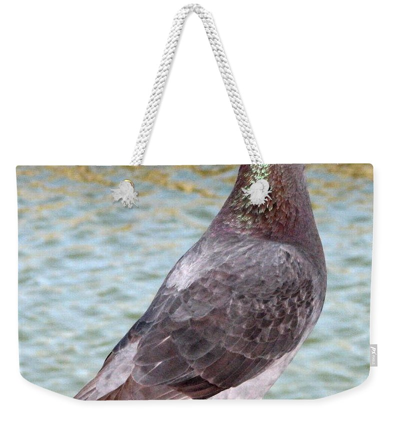 Pigeon Weekender Tote Bag featuring the photograph Pigeon by J M Farris Photography