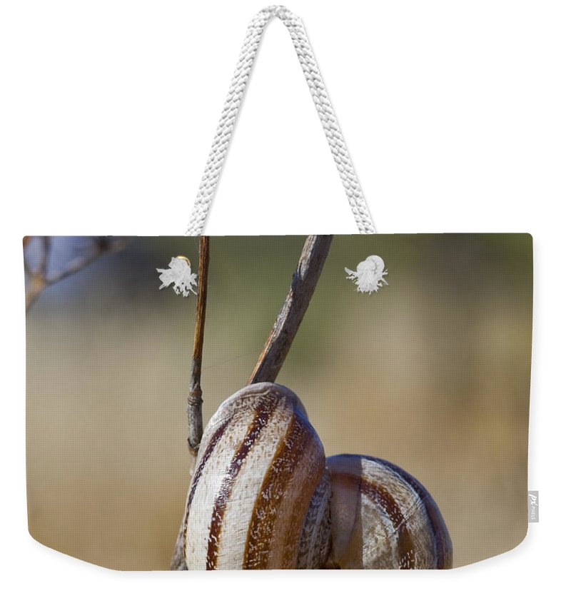 Snail Weekender Tote Bag featuring the photograph Piggy Back by Kelley King