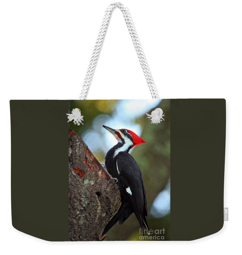 Woodpecker Weekender Tote Bag featuring the photograph Pilated Woodpecker by Randy Matthews
