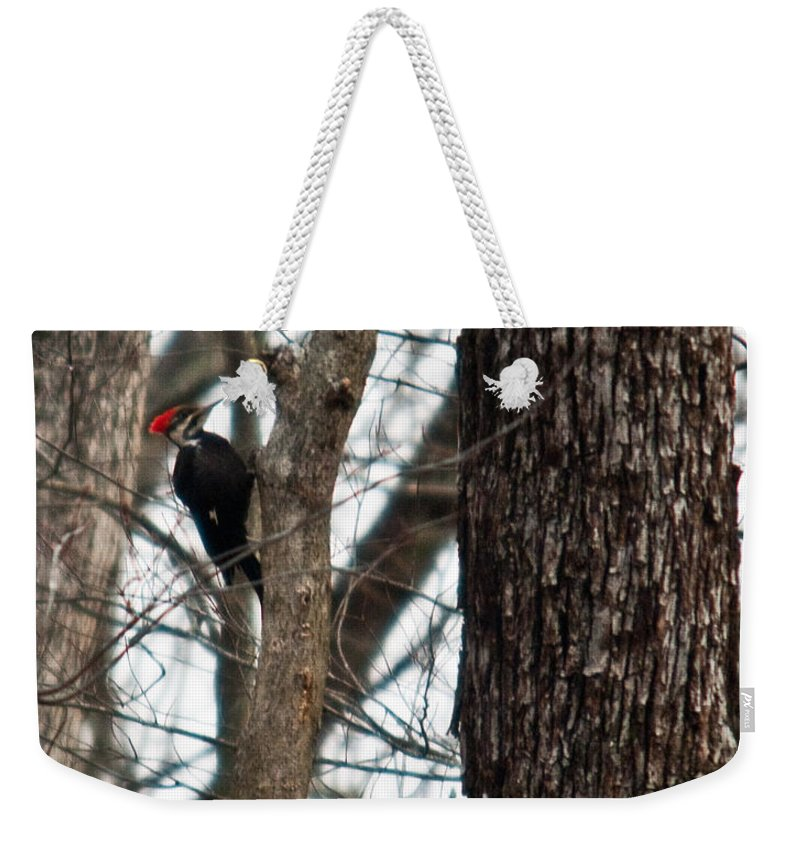 Cumberland Weekender Tote Bag featuring the photograph Pileated Billed Woodpecker by Douglas Barnett
