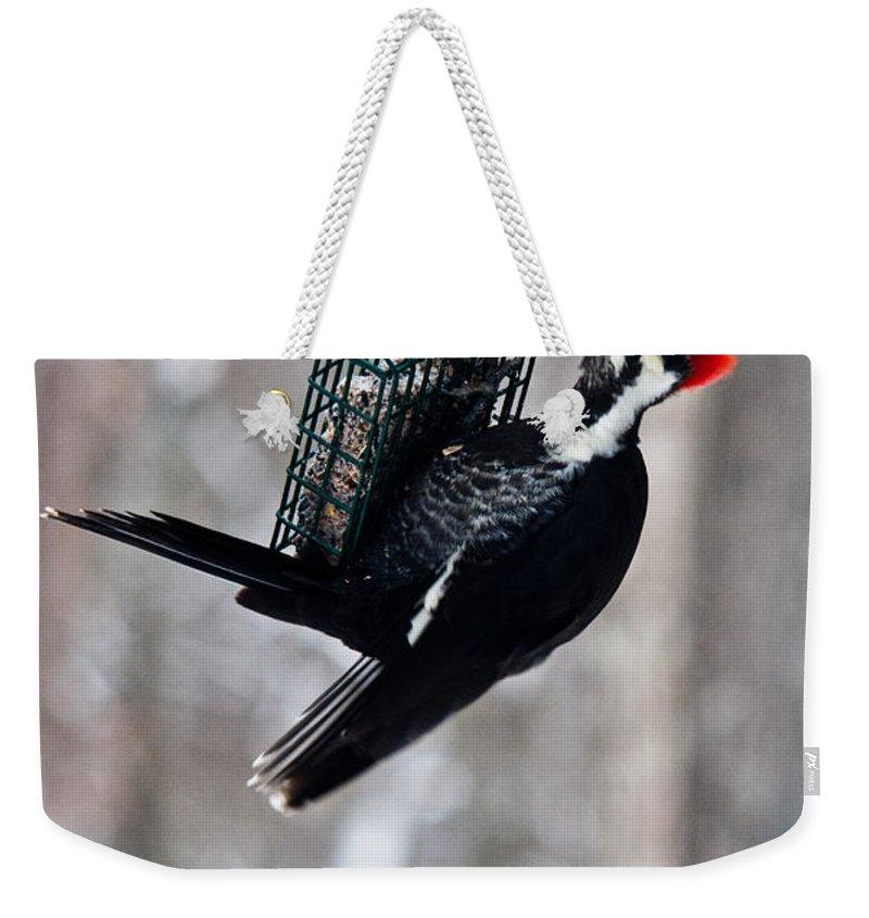 Cumberand Weekender Tote Bag featuring the photograph Pileated Billed Woodpecker Feeding 1 by Douglas Barnett