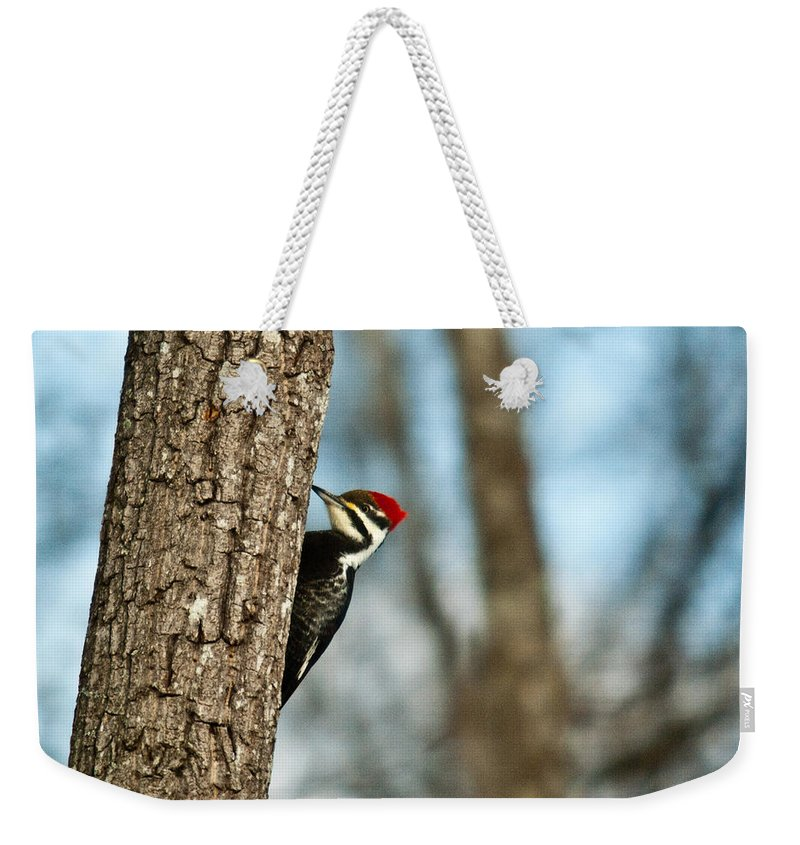 Cumberand Weekender Tote Bag featuring the photograph Pileated Billed Woodpecker Pecking 1 by Douglas Barnett