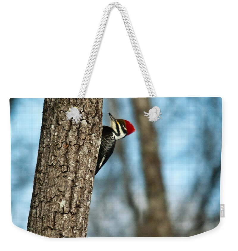 Cumberand Weekender Tote Bag featuring the photograph Pileated Billed Woodpecker Pecking 2 by Douglas Barnett