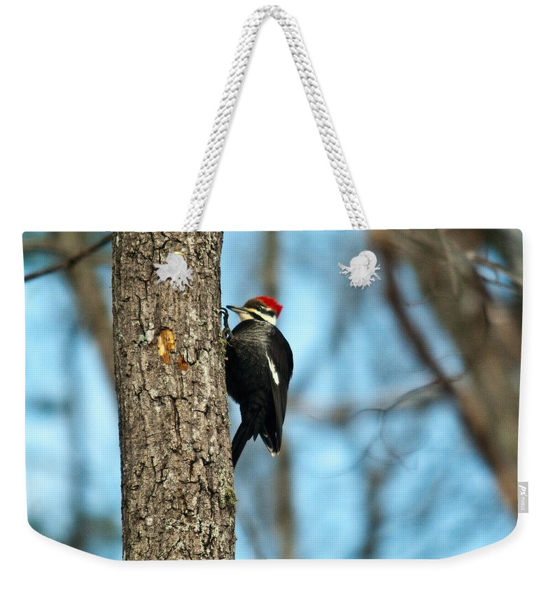 Cumberand Weekender Tote Bag featuring the photograph Pileated Billed Woodpecker Pecking 3 by Douglas Barnett