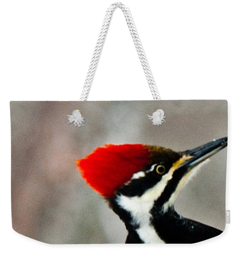 Pileated Weekender Tote Bag featuring the photograph Pileated Woodpecker Up Close by Douglas Barnett