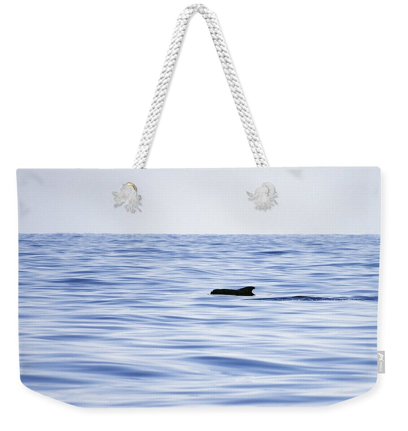 Spain Weekender Tote Bag featuring the photograph Pilot Whales 2 by Jouko Lehto