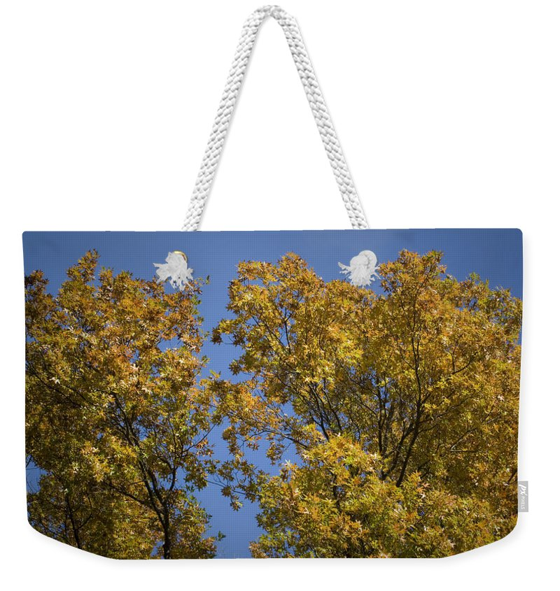 Fall Weekender Tote Bag featuring the photograph Pin Oaks In The Fall No 1 by Teresa Mucha