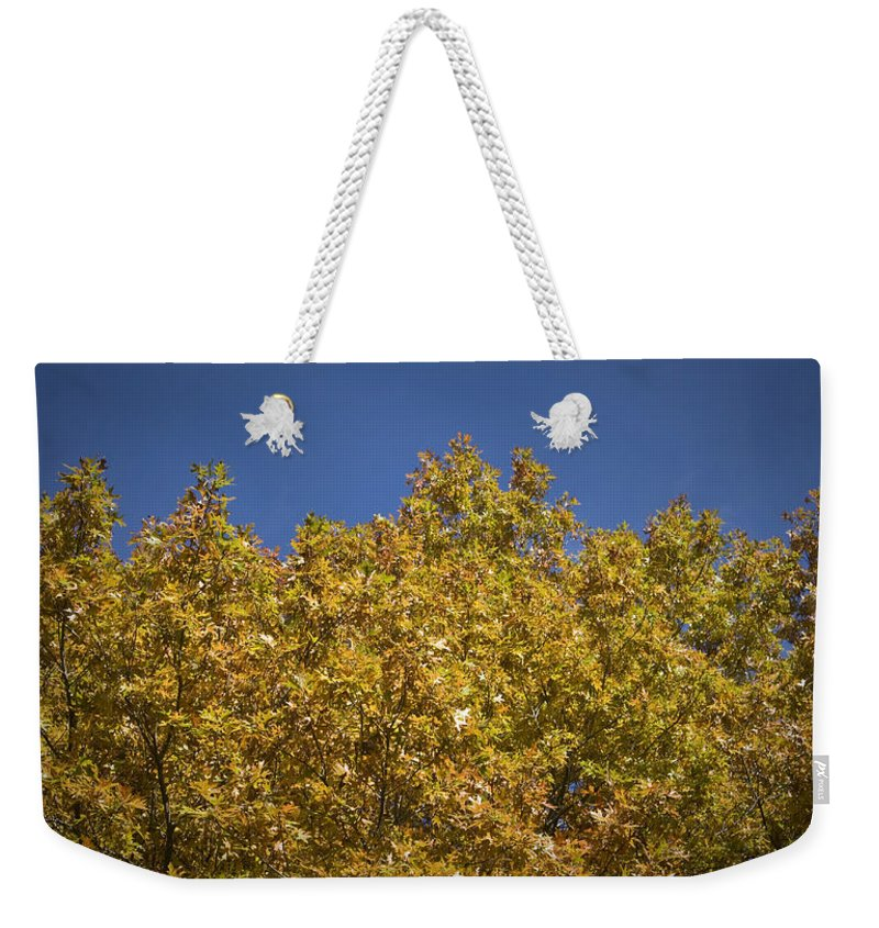 Fall Weekender Tote Bag featuring the photograph Pin Oaks In The Fall No 2 by Teresa Mucha