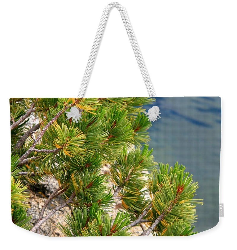 Pine Needles Weekender Tote Bag featuring the photograph Pine Needles Over Water by Chris Brannen