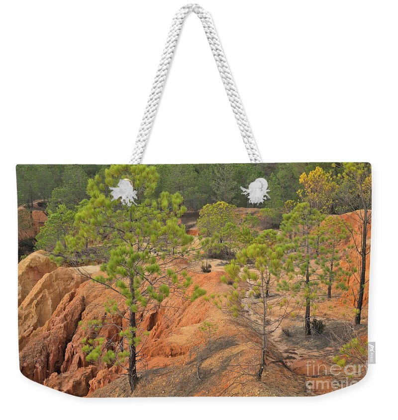 Trees Weekender Tote Bag featuring the photograph Pine Trees And Forest by Angelo DeVal