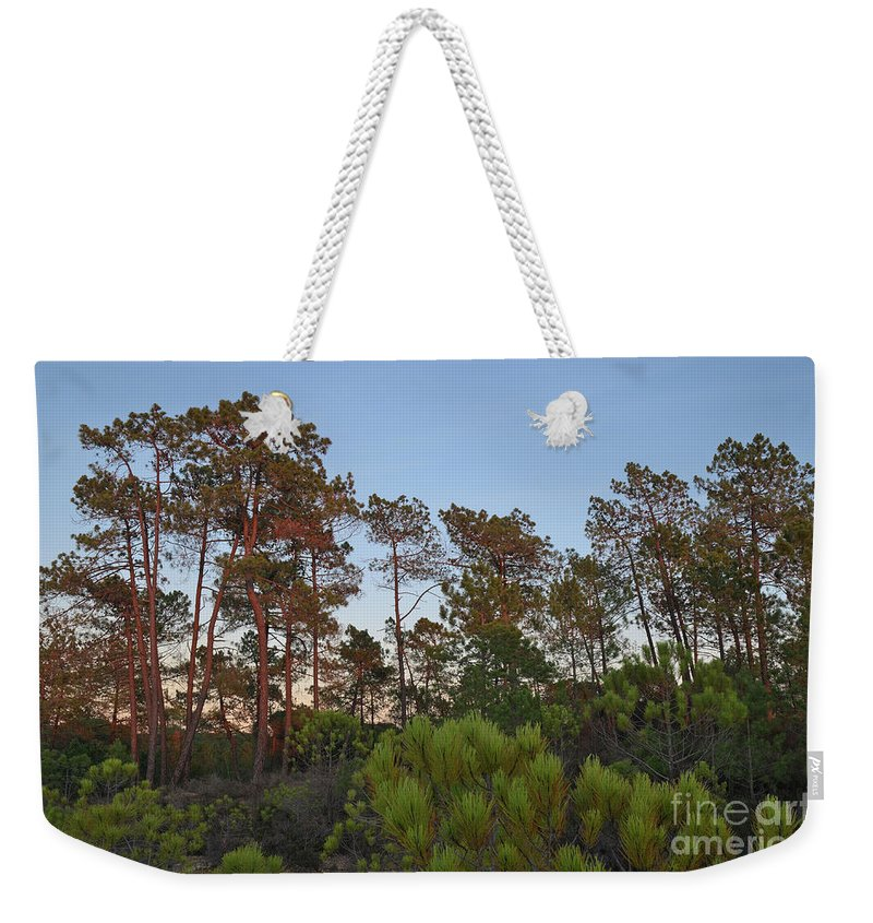 Trees Weekender Tote Bag featuring the photograph Pine Trees Waiting For Twilight by Angelo DeVal