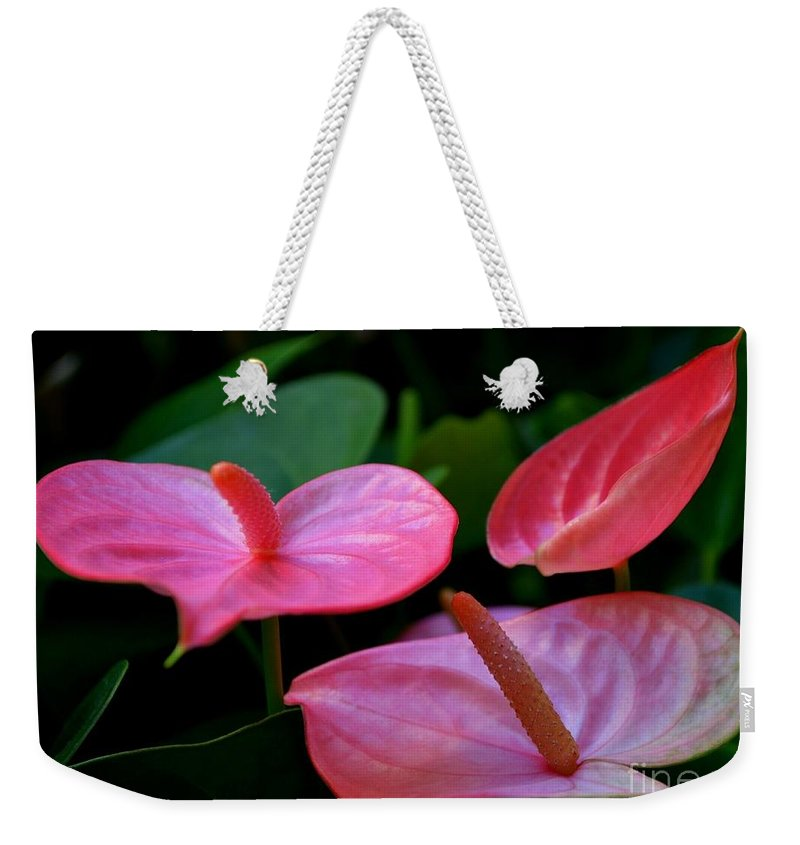 Pink Anthuriums Weekender Tote Bag featuring the photograph Pink Anthuriums by Mary Deal