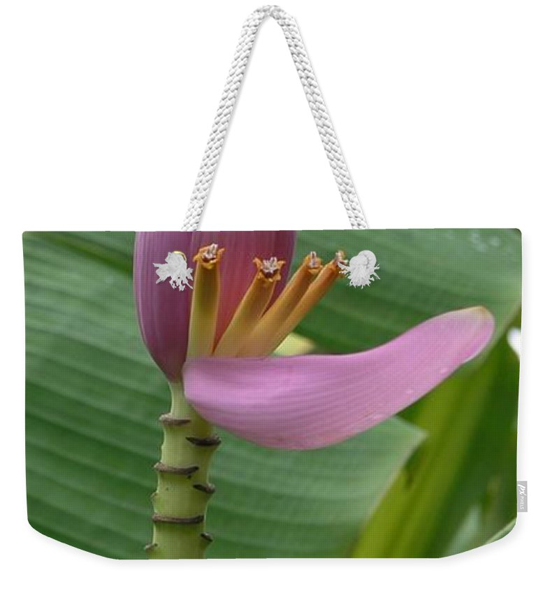 Banana Weekender Tote Bag featuring the photograph Pink Banana Flower by Mary Deal