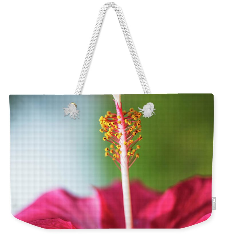 Hibiscus Weekender Tote Bag featuring the photograph Pink Colored Hibiscus Closeup Image by Vishwanath Bhat