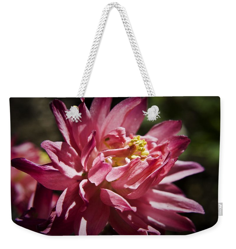 Columbine Weekender Tote Bag featuring the photograph Pink Columbine by Teresa Mucha