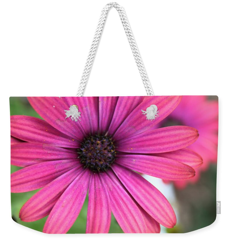 Daisy Weekender Tote Bag featuring the photograph Pink Daisy by Lauri Novak