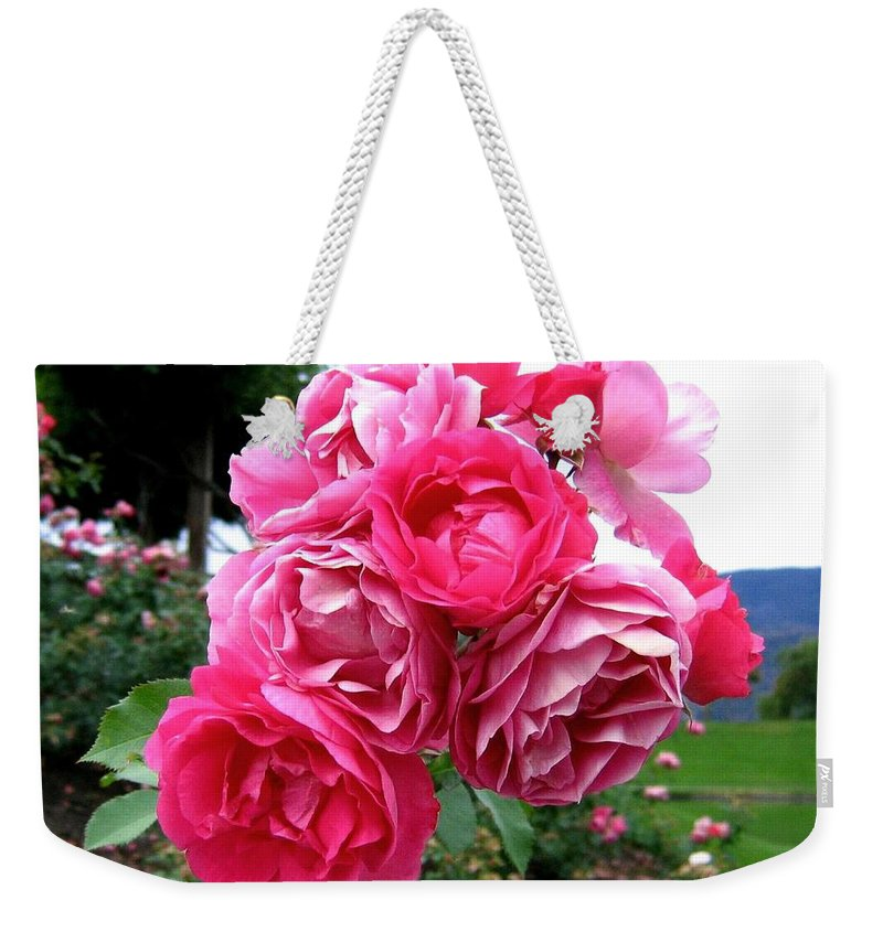 Roses Weekender Tote Bag featuring the photograph Pink Floribunda Roses by Will Borden