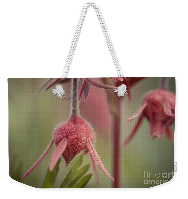 Colorado Weekender Tote Bag featuring the photograph Pink Fuzz 4 by Ashley M Conger