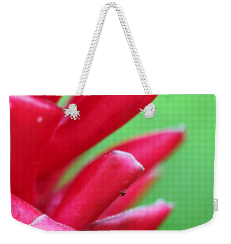 Ginger Weekender Tote Bag featuring the photograph Pink Ginger by Nadine Rippelmeyer