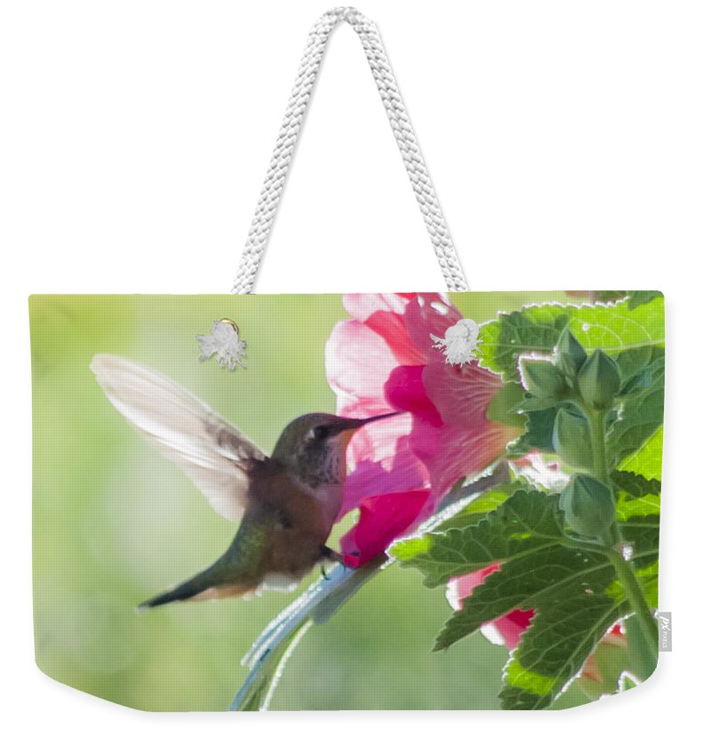 Pink Weekender Tote Bag featuring the photograph Pink Little Anna's Chupa Sittin In A Flower by CheyAnne Sexton