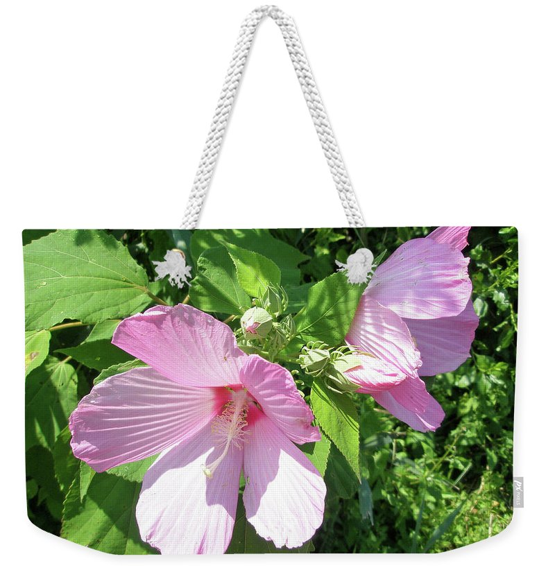 Hibiscus Weekender Tote Bag featuring the photograph Pink Marsh Mallow Wildflower by Mother Nature