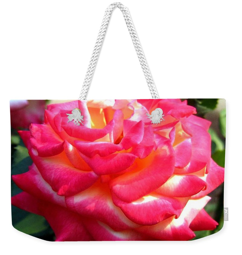 Rose Weekender Tote Bag featuring the photograph Pink Perfection by Will Borden