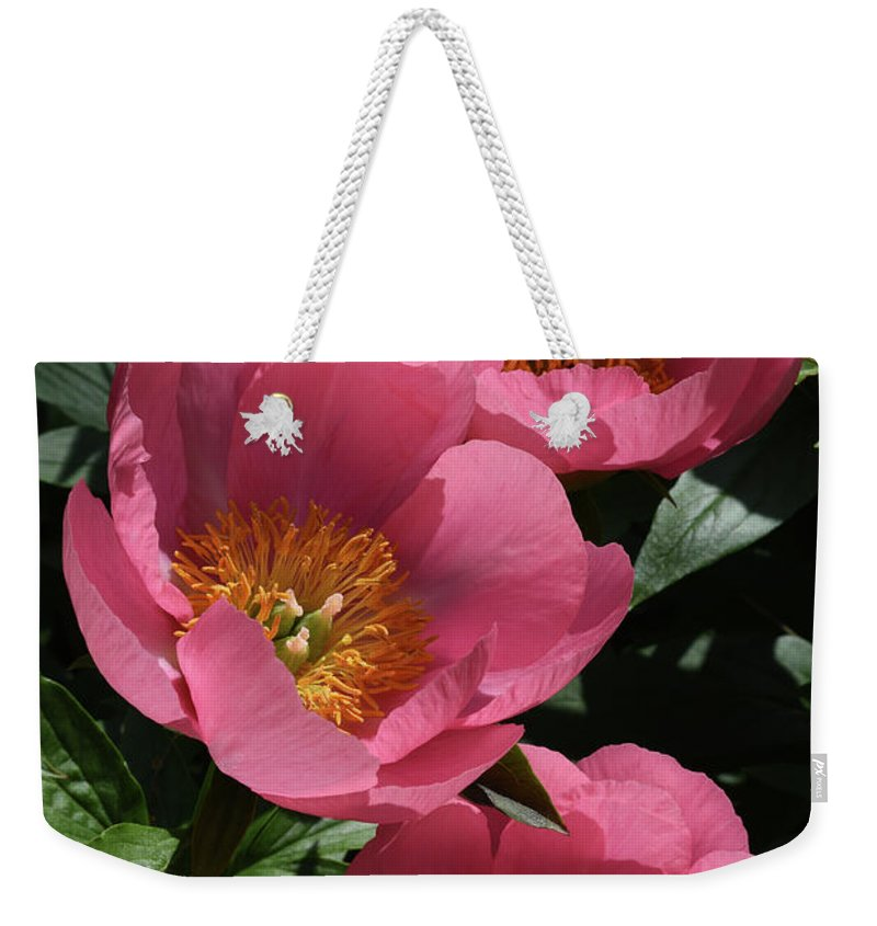 Peony Weekender Tote Bag featuring the photograph Pink Perspective 0463 by Terri Winkler
