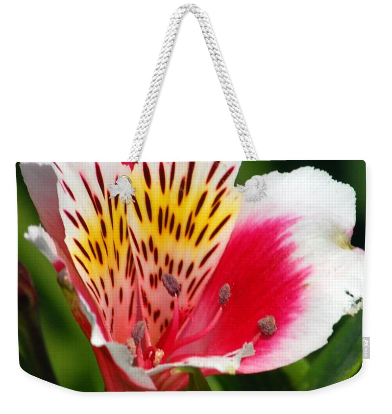 Peruvian Weekender Tote Bag featuring the photograph Pink Peruvian Lily 1 by Amy Fose