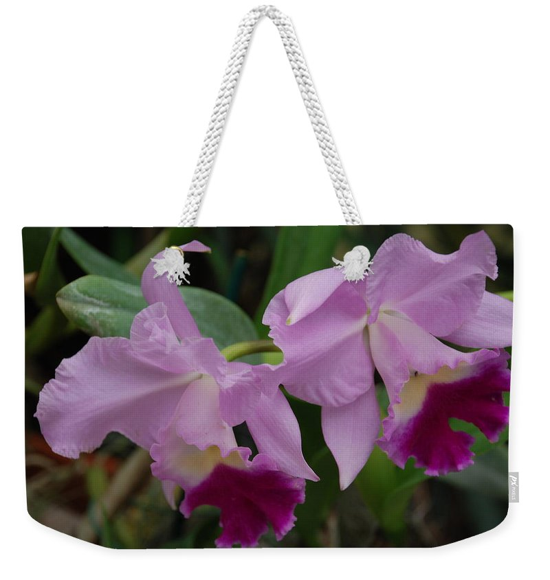 Macro Weekender Tote Bag featuring the photograph Pink Purple Orchids by Rob Hans
