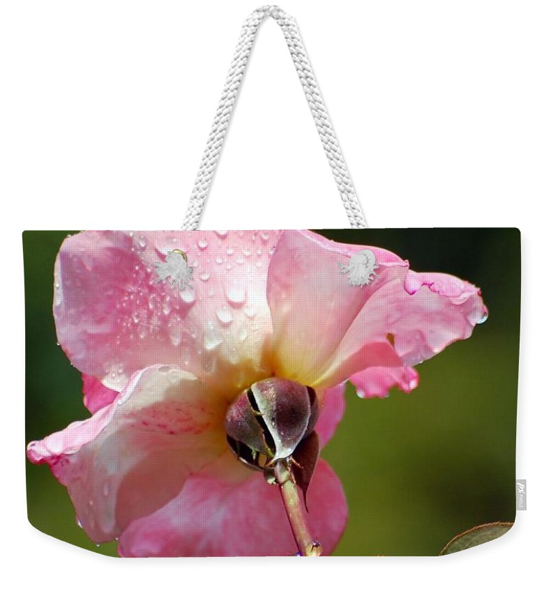 Rose Weekender Tote Bag featuring the photograph Pink Rose In The Rain 2 by Amy Fose