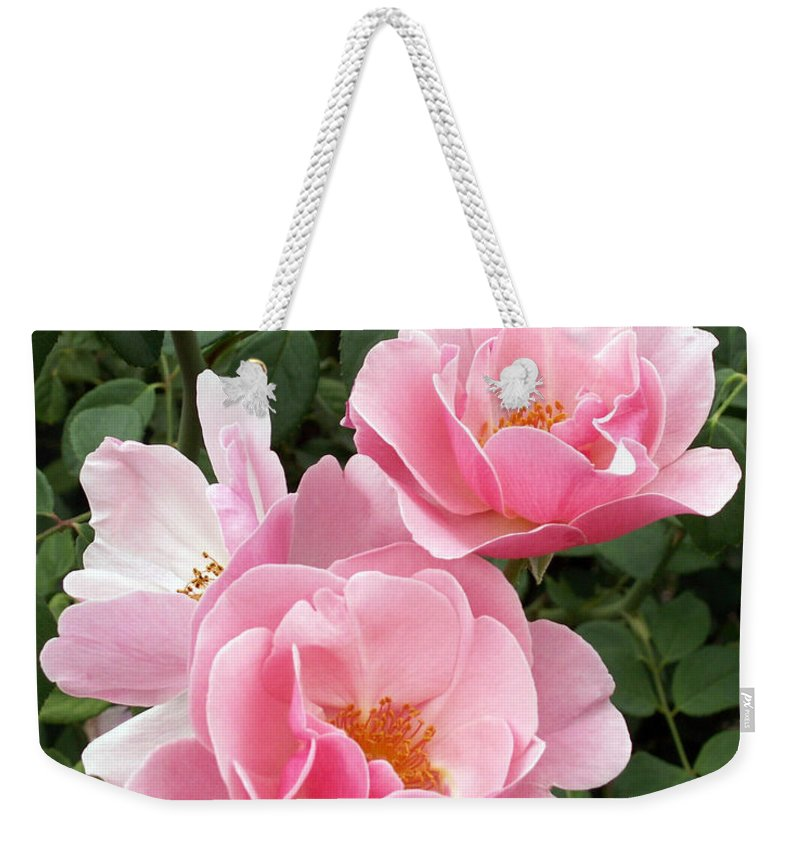 Roses Weekender Tote Bag featuring the photograph Pink Roses 1 by Amy Fose