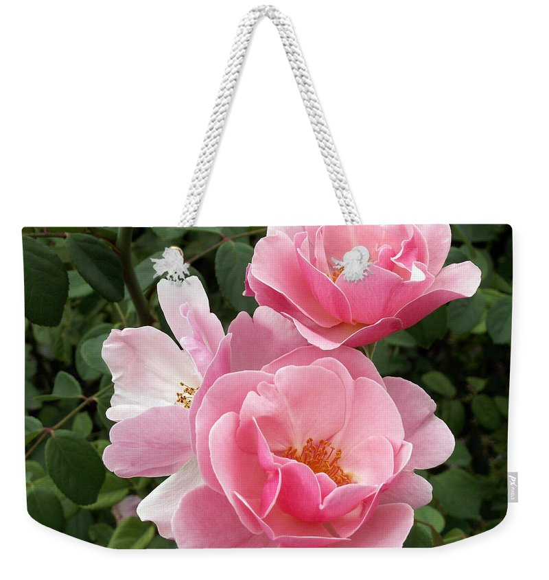 Pink Roses Weekender Tote Bag featuring the photograph Pink Roses 2 by Amy Fose