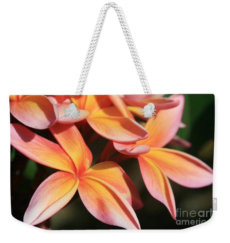 Aloha Weekender Tote Bag featuring the photograph Pink Tropical Plumeria Makawao Maui Hawaii by Sharon Mau