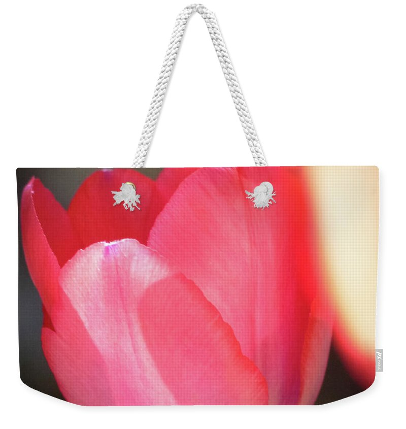 Jeanette Wygant Weekender Tote Bag featuring the photograph Pink Tulip by Jeanette Wygant