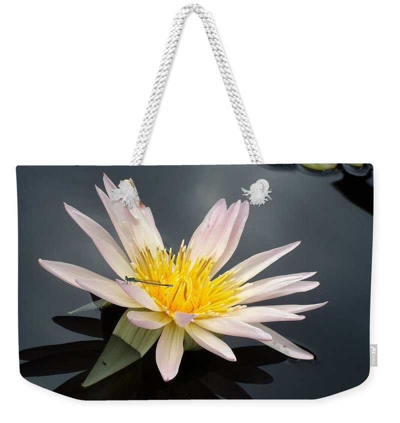 Water Lily Weekender Tote Bag featuring the photograph Pink Water Lily With Dragonfly by Laurel Smith