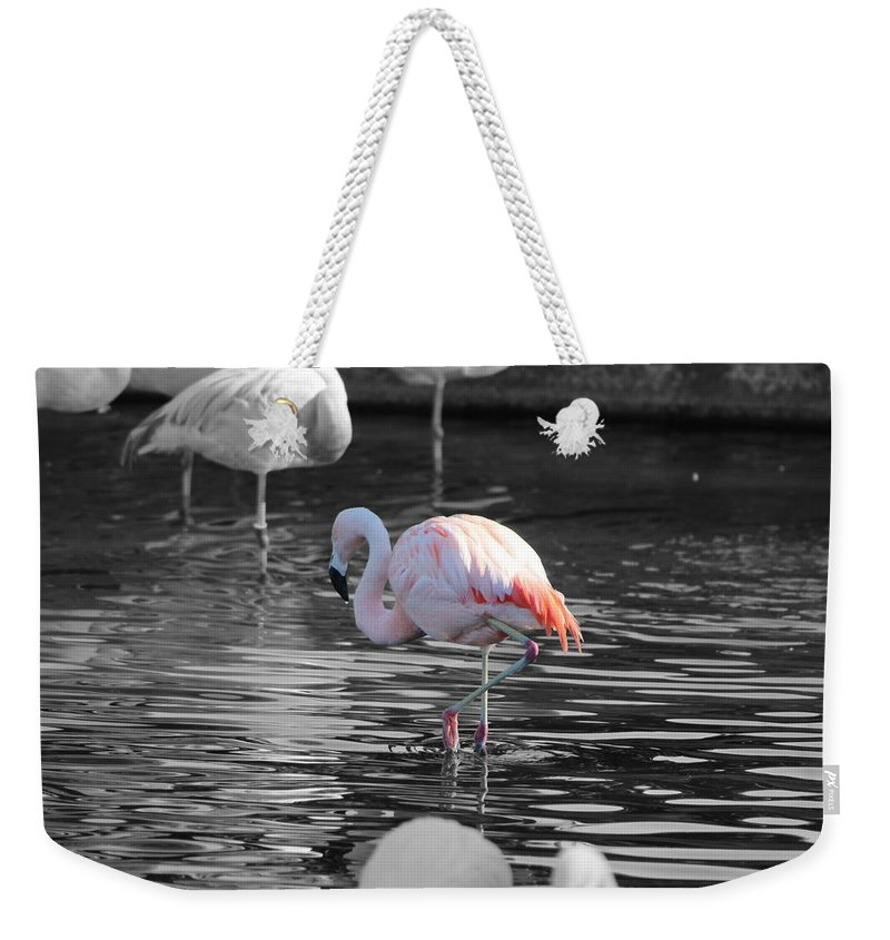 Palm Desert California Weekender Tote Bag featuring the photograph Pinky by Colleen Cornelius