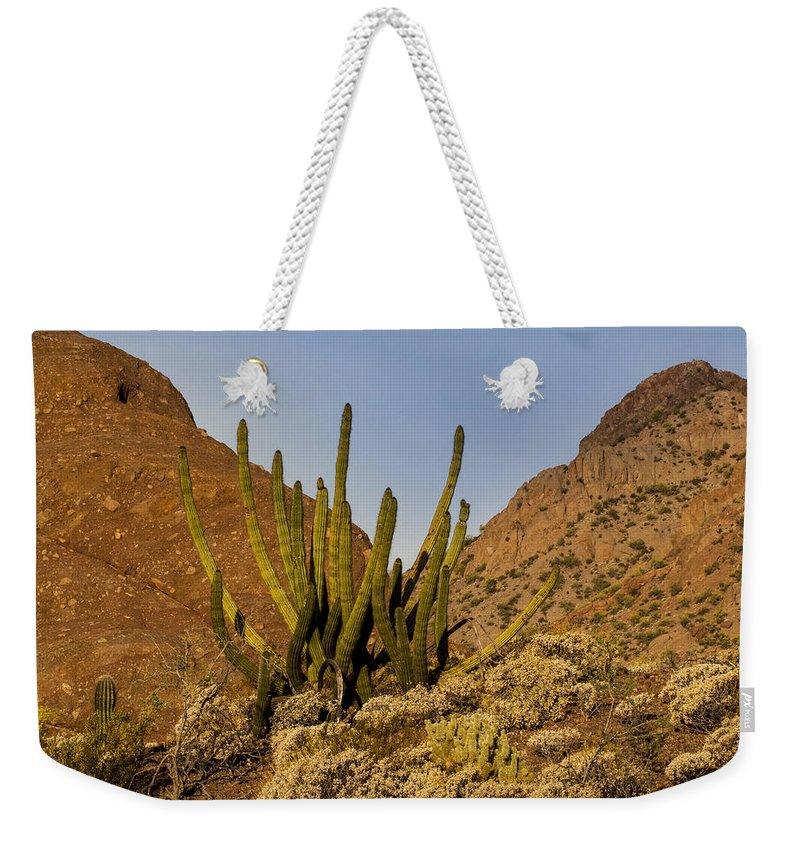 Jean Noren Weekender Tote Bag featuring the photograph Pipe Organ Cactus At Sunrise by Jean Noren