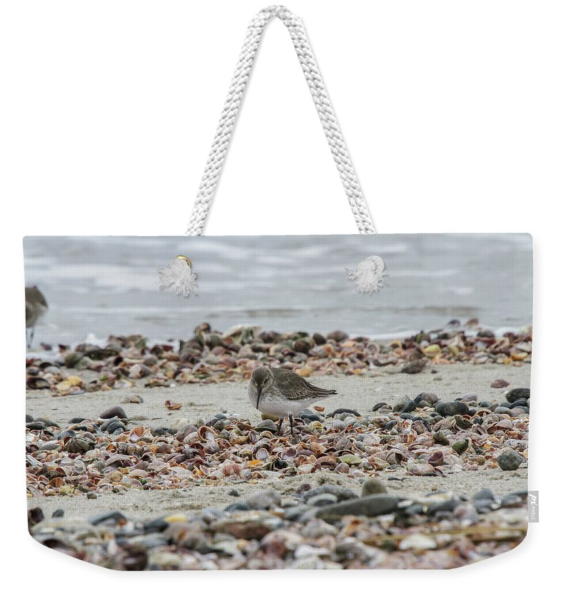Wildlife Weekender Tote Bag featuring the photograph Piping by Barbara Blanchard