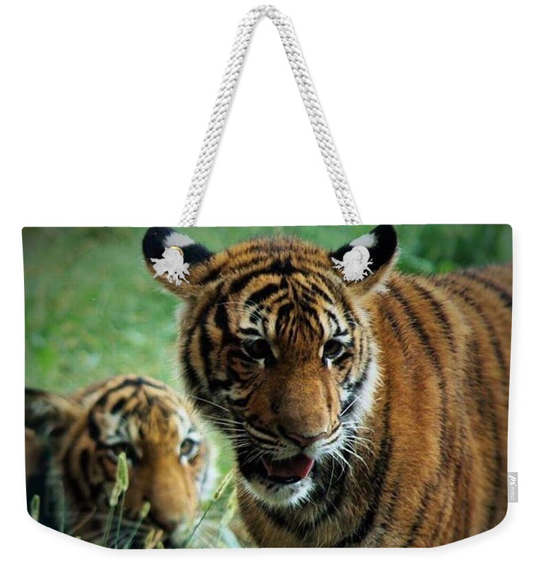 Tiger Weekender Tote Bag featuring the photograph Play Time by Teresa Self