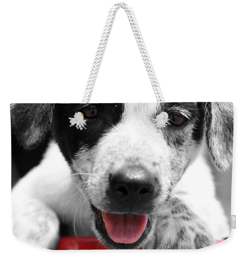 Puppy Weekender Tote Bag featuring the photograph Playing by Amanda Barcon