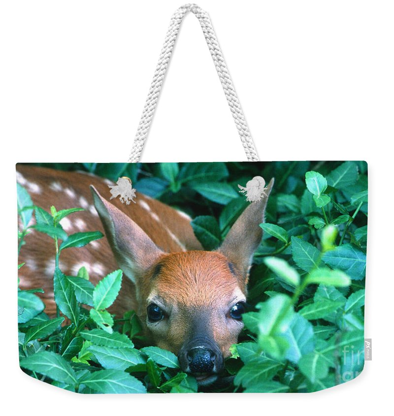 Fawn Weekender Tote Bag featuring the photograph Playing Peekaboo by Sandra Bronstein