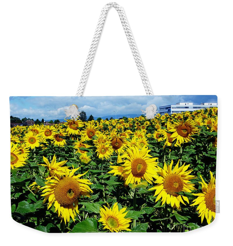 Sunflowers Weekender Tote Bag featuring the photograph Pleasant Warmth by Jeff Barrett