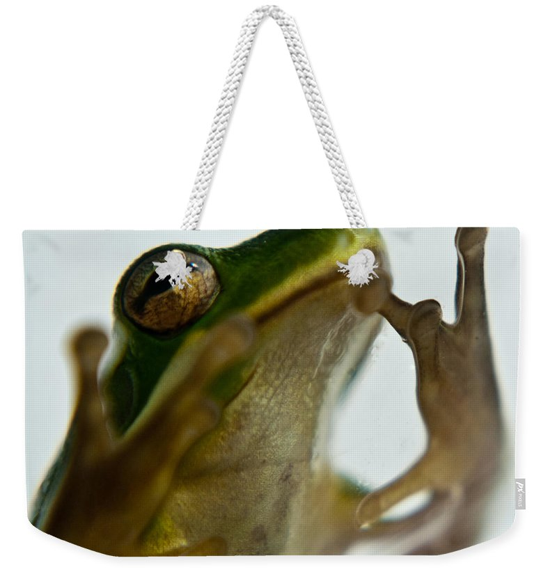 Frog Weekender Tote Bag featuring the photograph Please Not In A Frogs Eye by Douglas Barnett