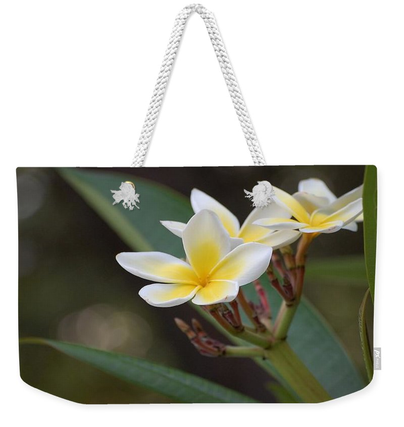Plumeria Weekender Tote Bag featuring the photograph Plumeria II by Robert Meanor