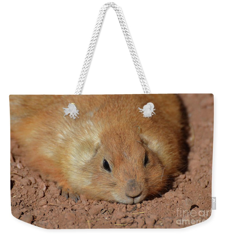 Fat Weekender Tote Bag featuring the photograph Plump Resting Prairie Dog Laying Down by DejaVu Designs