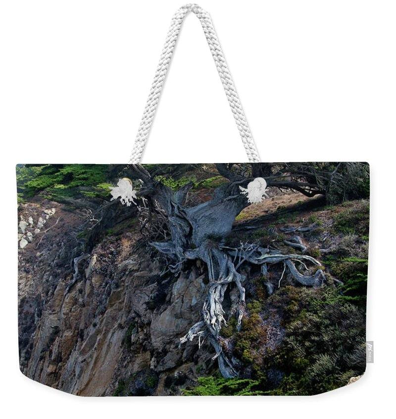 Landscape Weekender Tote Bag featuring the photograph Point Lobos Veteran Cypress Tree by Charlene Mitchell
