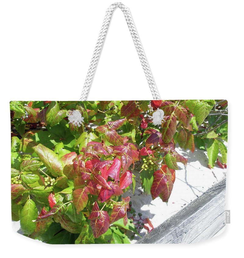 Ivy Weekender Tote Bag featuring the photograph Poison Ivy Comes A Creeping by Mother Nature