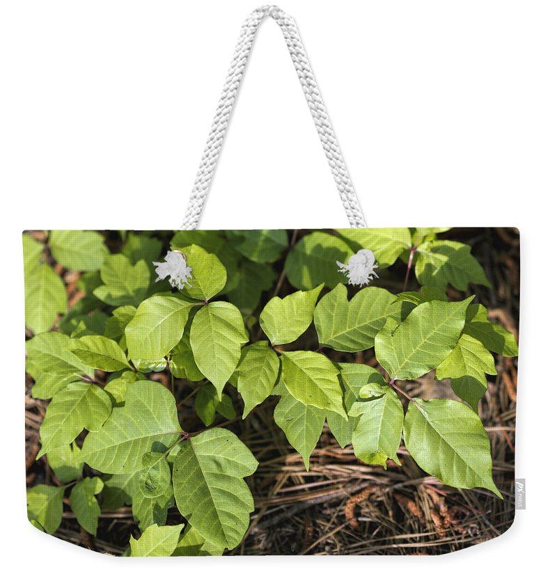 Toxicodendron Weekender Tote Bag featuring the photograph Poison Oak Vine - Toxicodendron by Kathy Clark